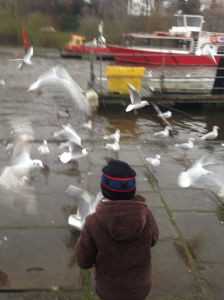 T feeding pigeons
